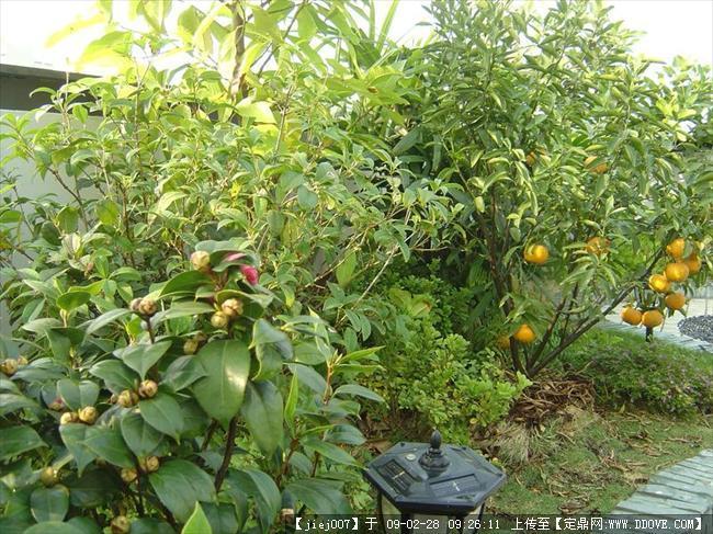 秀秀我家的屋顶花园,太漂亮了-龙岗-万科第五园(转)
