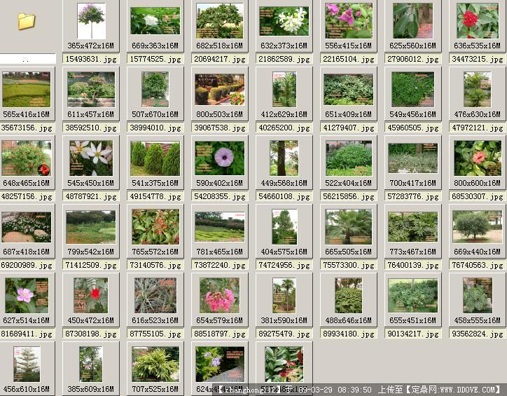 园林植物知识