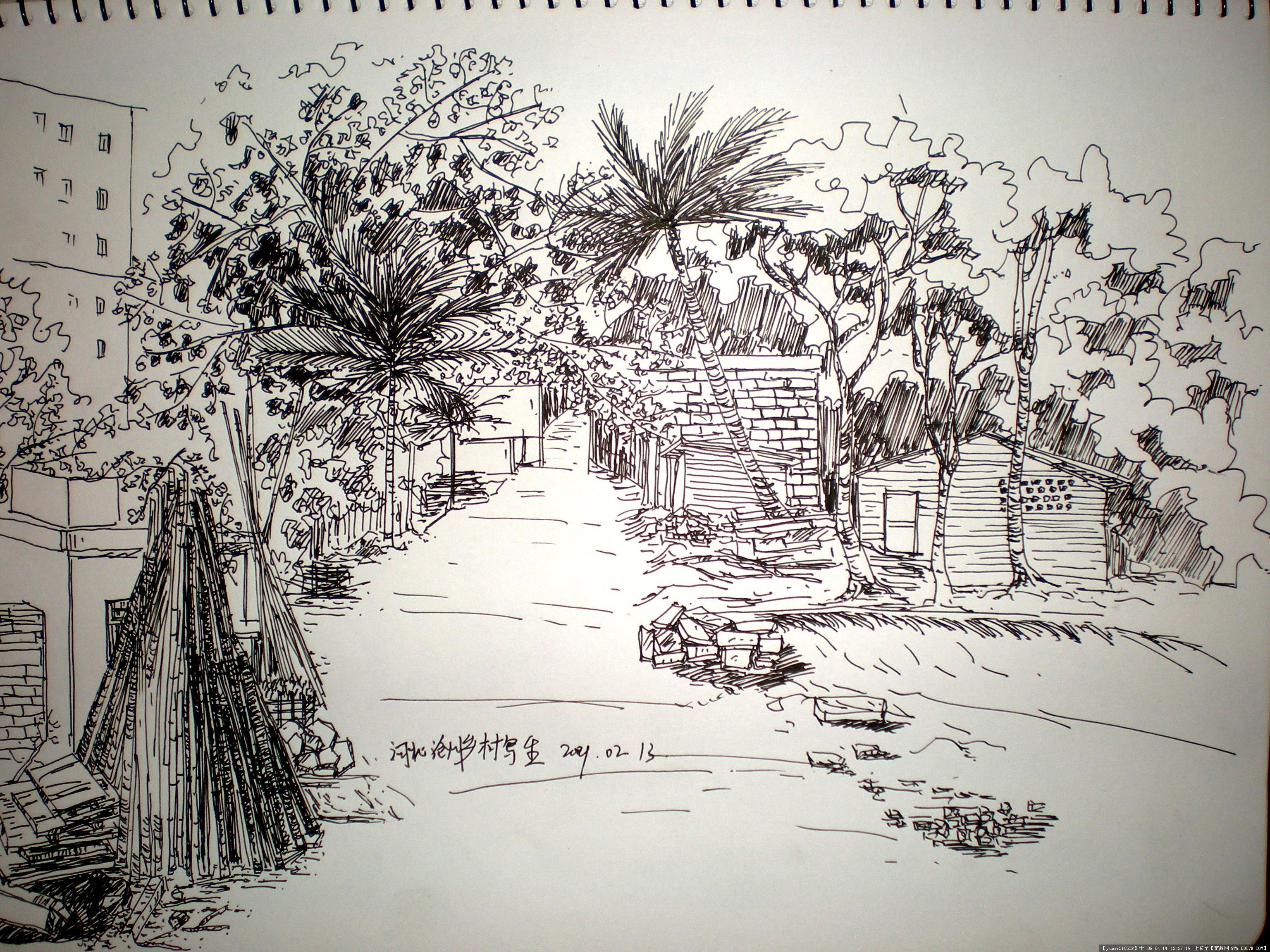 钢笔画树手绘范图