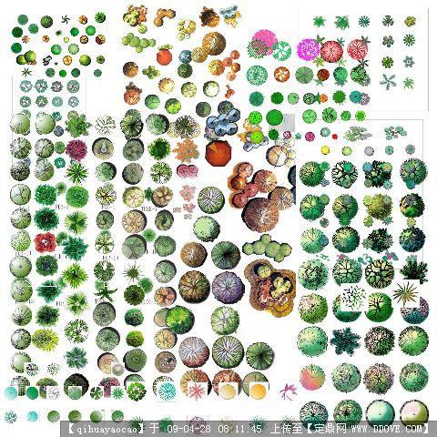 ps植物平面图例素材; psd手绘平面树素材(); 园林植物平面素材彩图.