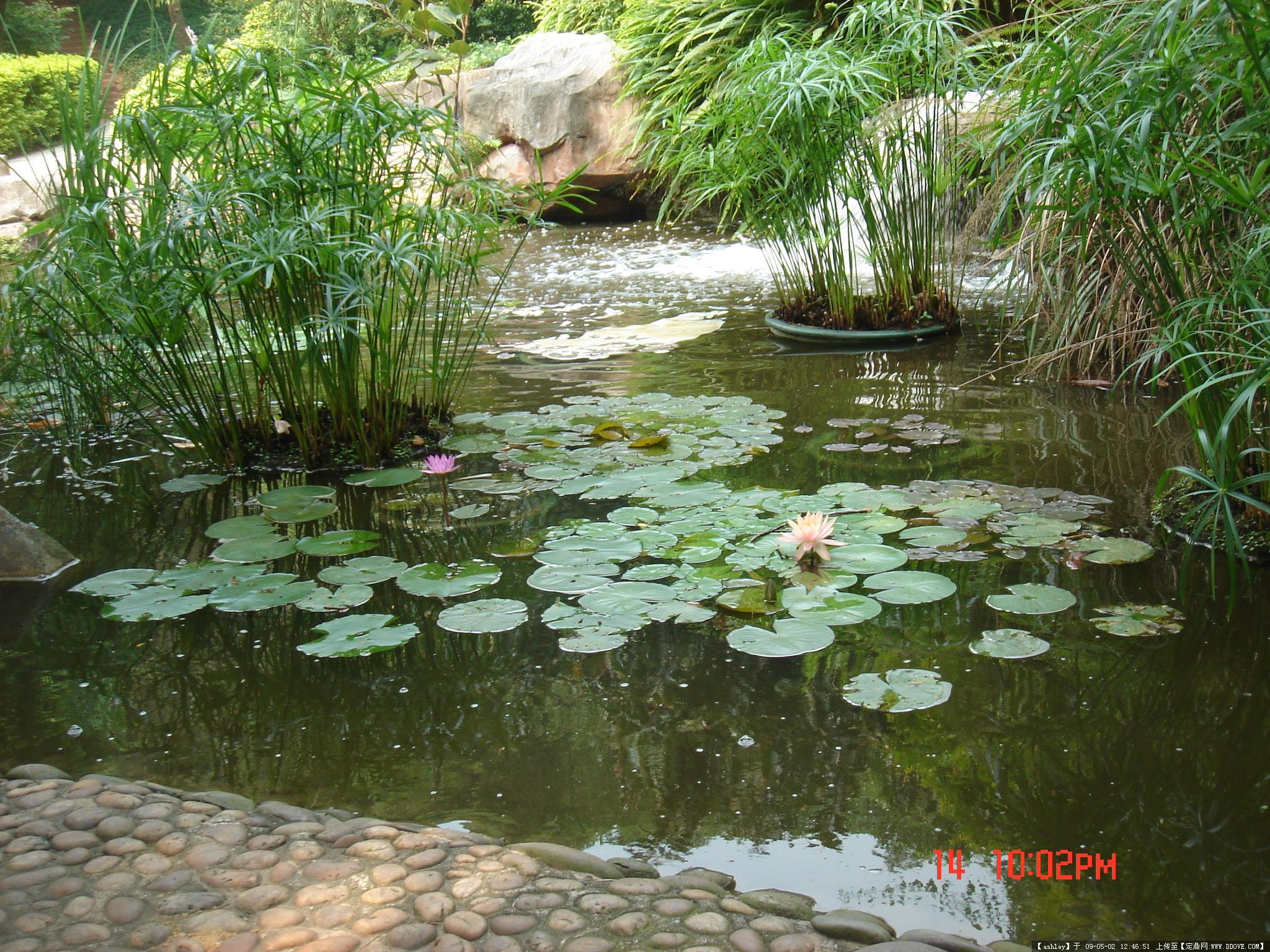 植物造景图片