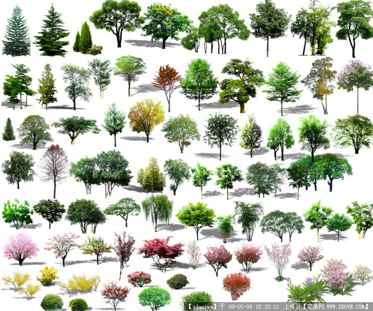 常用树 psd的下载地址,配景素材,园林植物,园林建筑