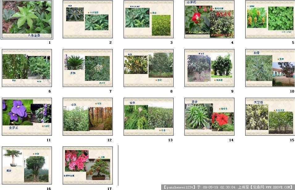 园林景观设计施工图纸资料下载_定鼎园林; 园林种植植物图ppt;