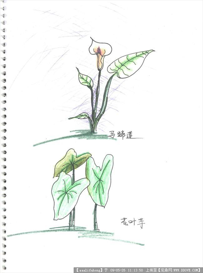植物手绘图