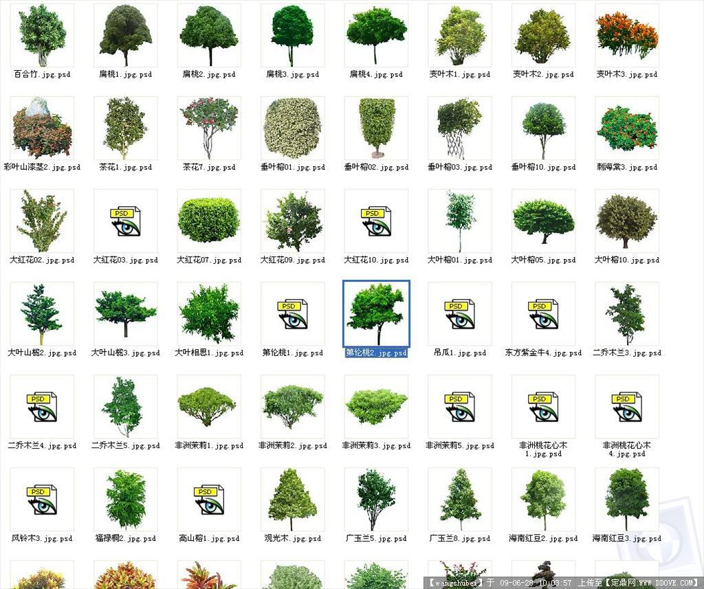 81种植物ps立面图