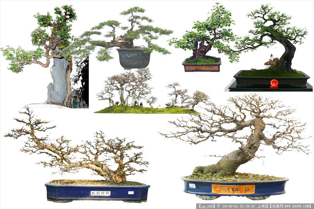 树桩盆景psd分层素材01的下载地址,配景素材,园林植物
