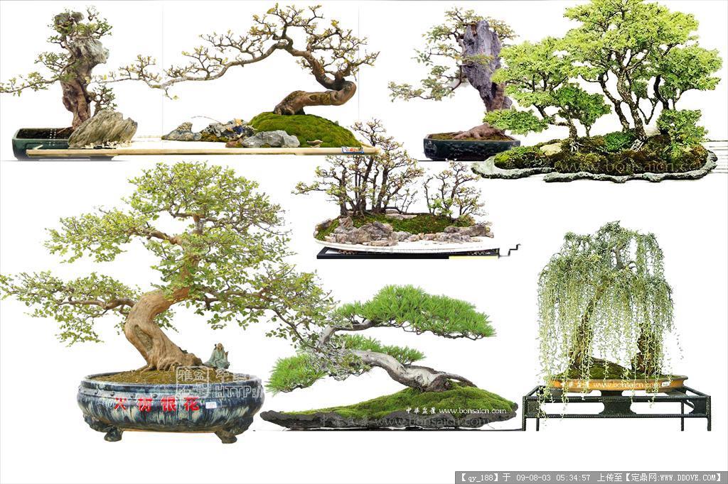 树桩盆景psd分层素材02的下载地址,配景素材,园林植物