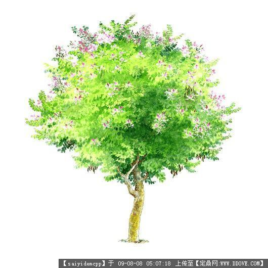 100个手绘园林植物立面图含树名——精典珍藏-红花羊蹄甲.jpg