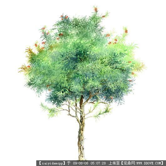 景观植物立面手绘;; 手绘园林植物立面图百例;;