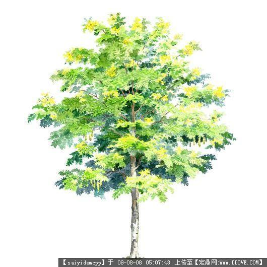 100个手绘园林植物立面图含树 - 动手网
