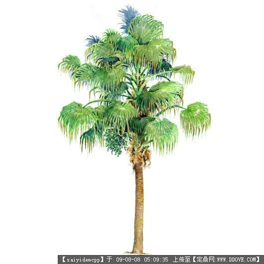 100个手绘园林植物立面图含树名——精典珍藏