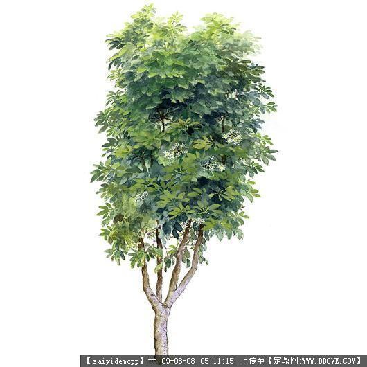 100个手绘园林植物立面图含树