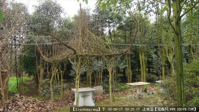 庭院植物配置图片的图片浏览