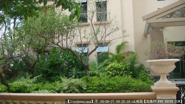 庭院植物配置图片