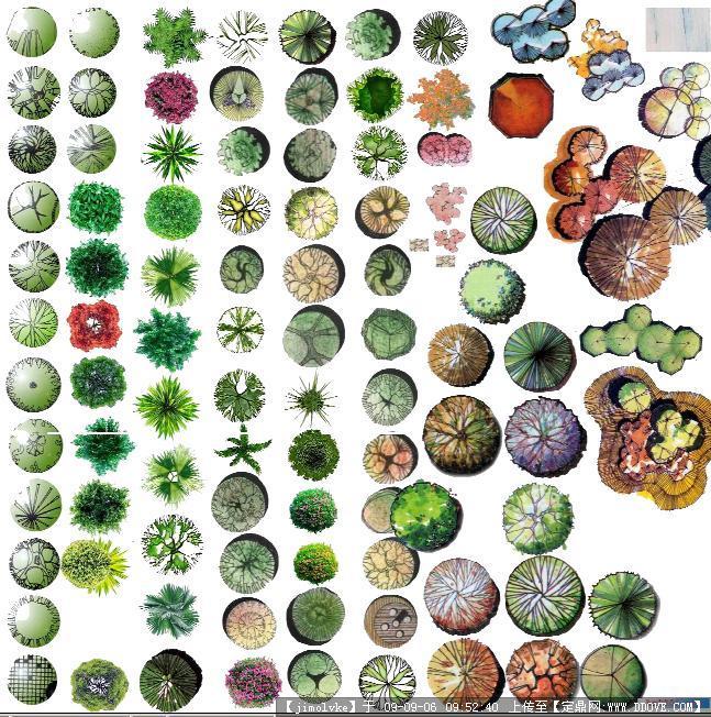 植物的共同特点