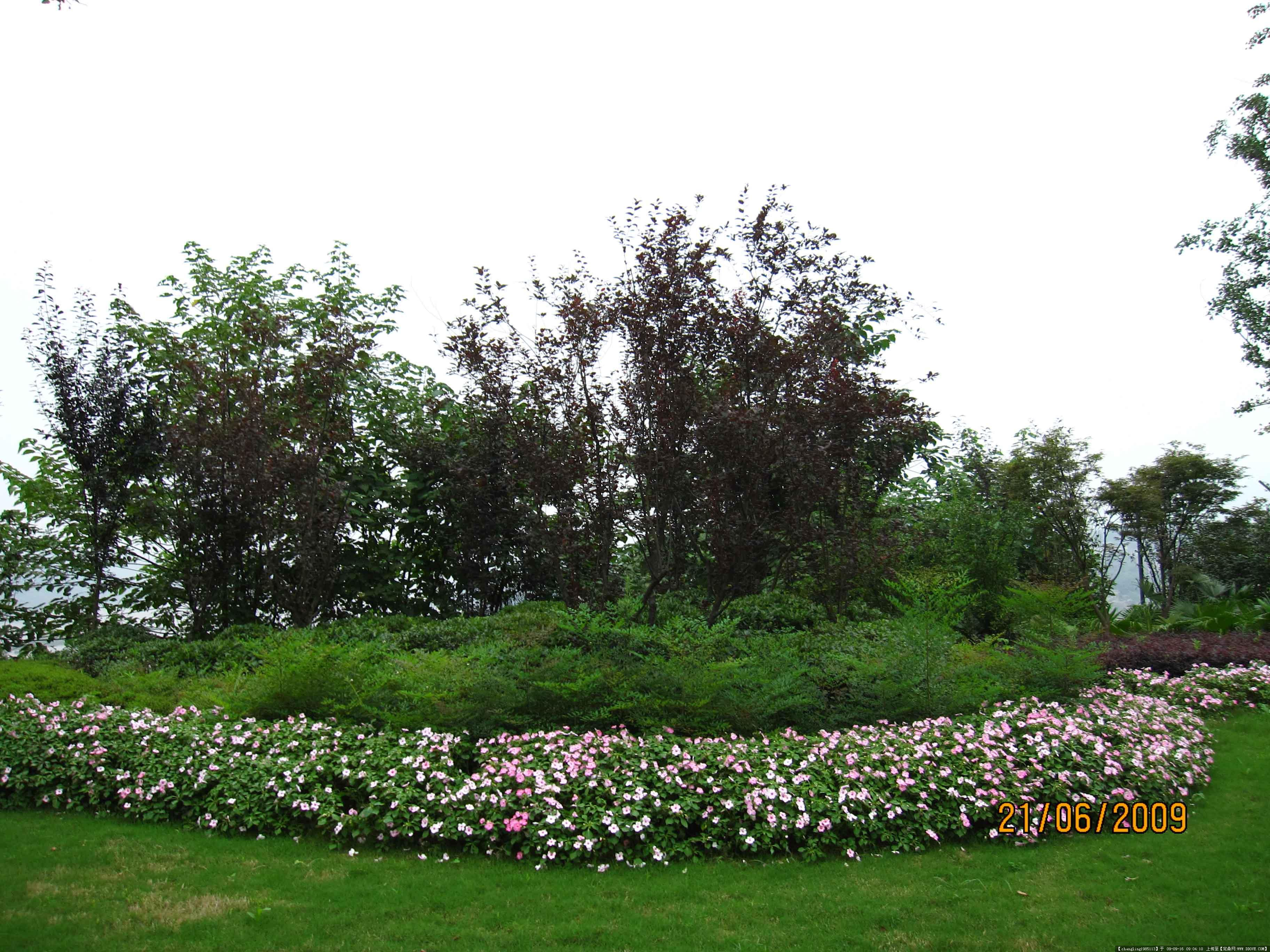 高档花园洋房植物配置图片