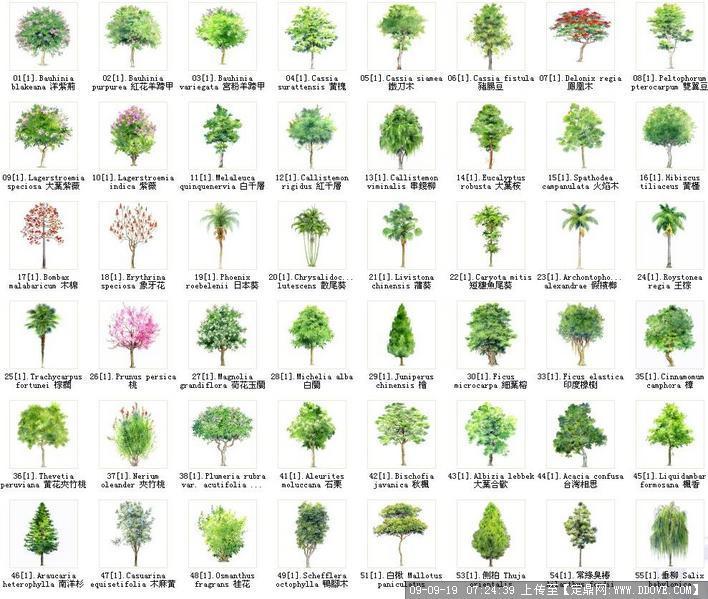 水彩植物素材——psd效果图后期处理素材