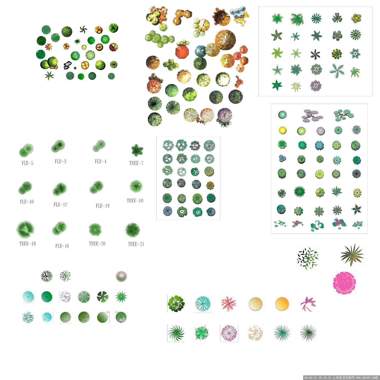 园林景观植物平面素材彩图