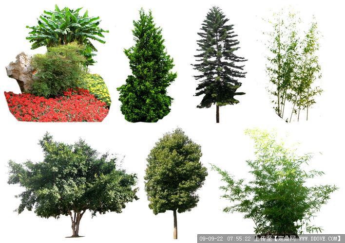 定鼎网 定鼎园林 园林方案设计 公园景观 ps植物立面  序号 文件名