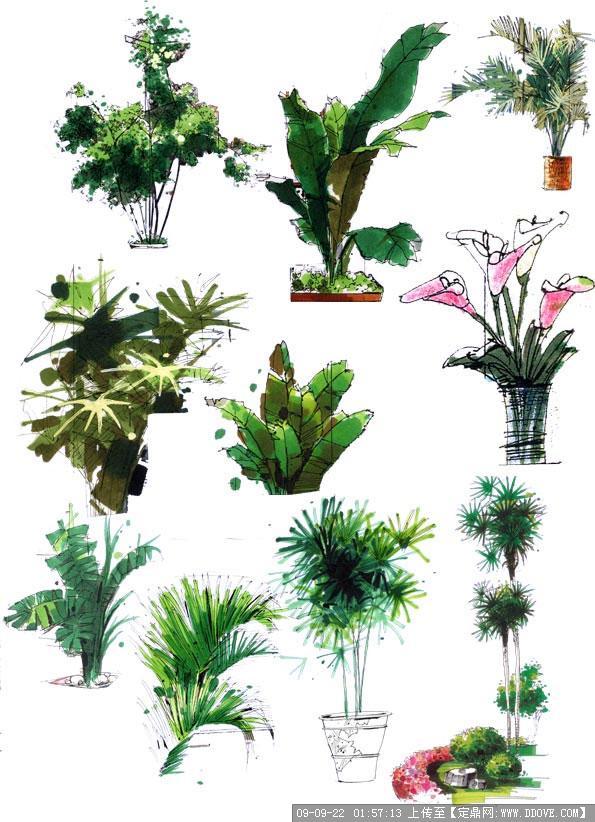 定鼎园林 园林方案设计 公园景观  资料说明:  一些园林手绘的树木