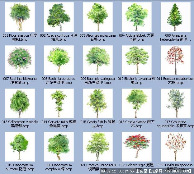 手绘植物(带植物名称)3