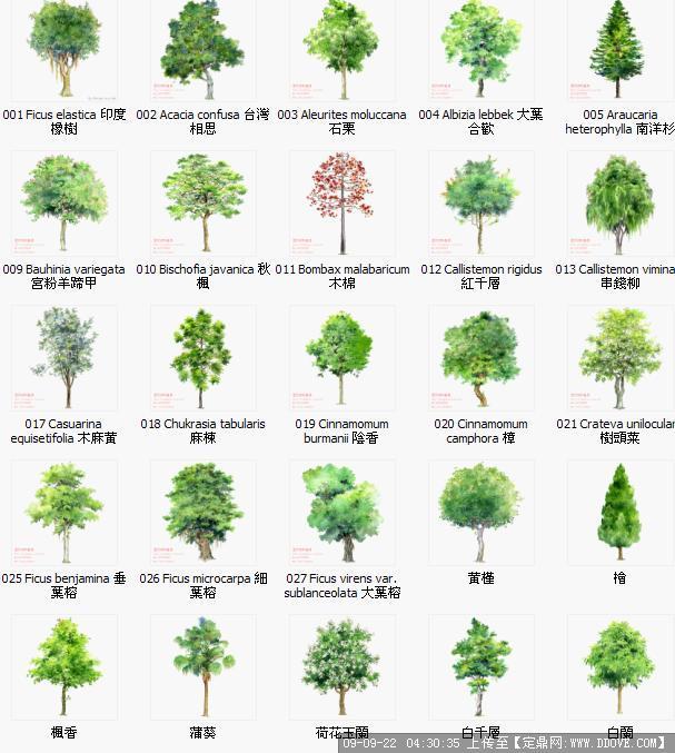 手绘园林植物立面图,超漂亮