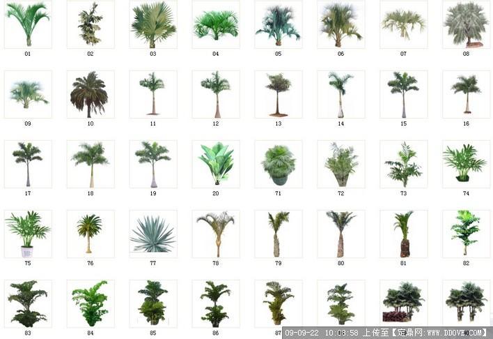 棕榈剑兰类植物41种植物素材