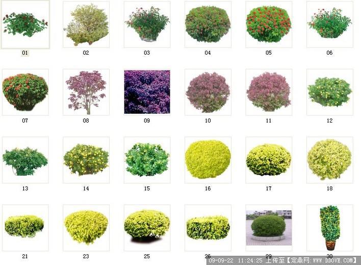 植物素材35灌木素材 035 c1