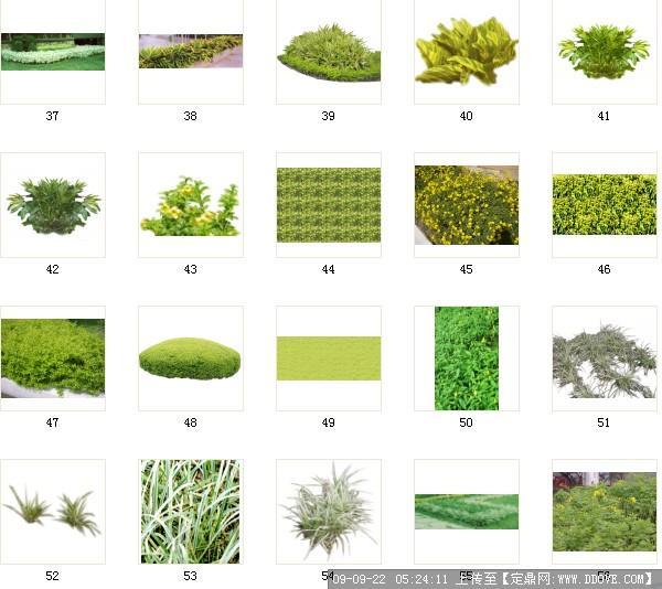 植被类型矢量图