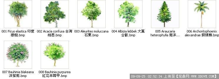 漂亮的手绘植物立面素材1的下载地址,配景素材,园林