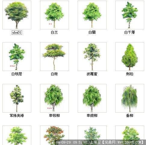 树资料集; 手绘植物平面素材ps植物手绘平面素材 手绘植物平面图例1