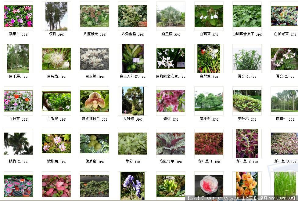 南方常见景观植物配置 470p实景照片