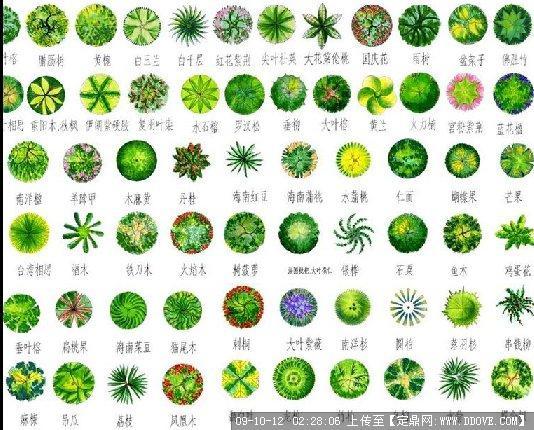 植物平面素材的下载地址,配景素材,园林植物,园林建筑