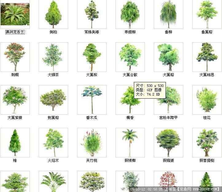 ps植物彩平素材总汇; 配景素材 园林植物 ps平面树;