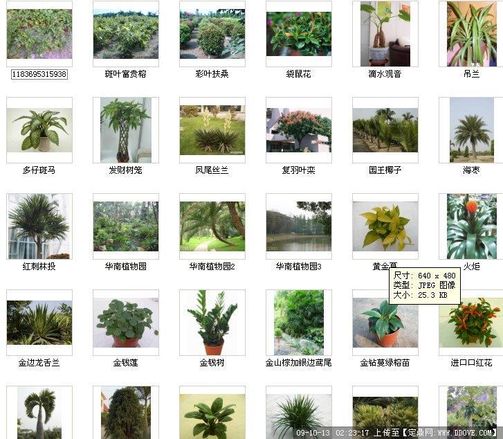 园林植物图片