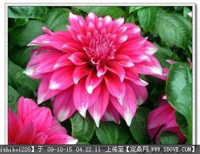 女生初中(包括图片科、属、种名称)的图片v女生植物好什么植物学图片