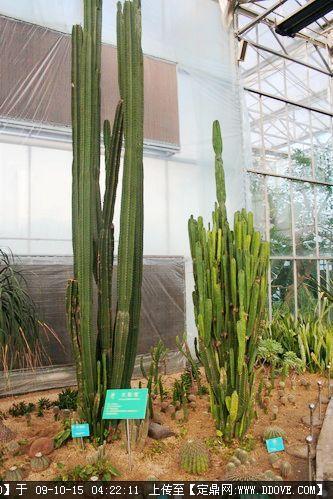 仙人掌类植物大全及名称