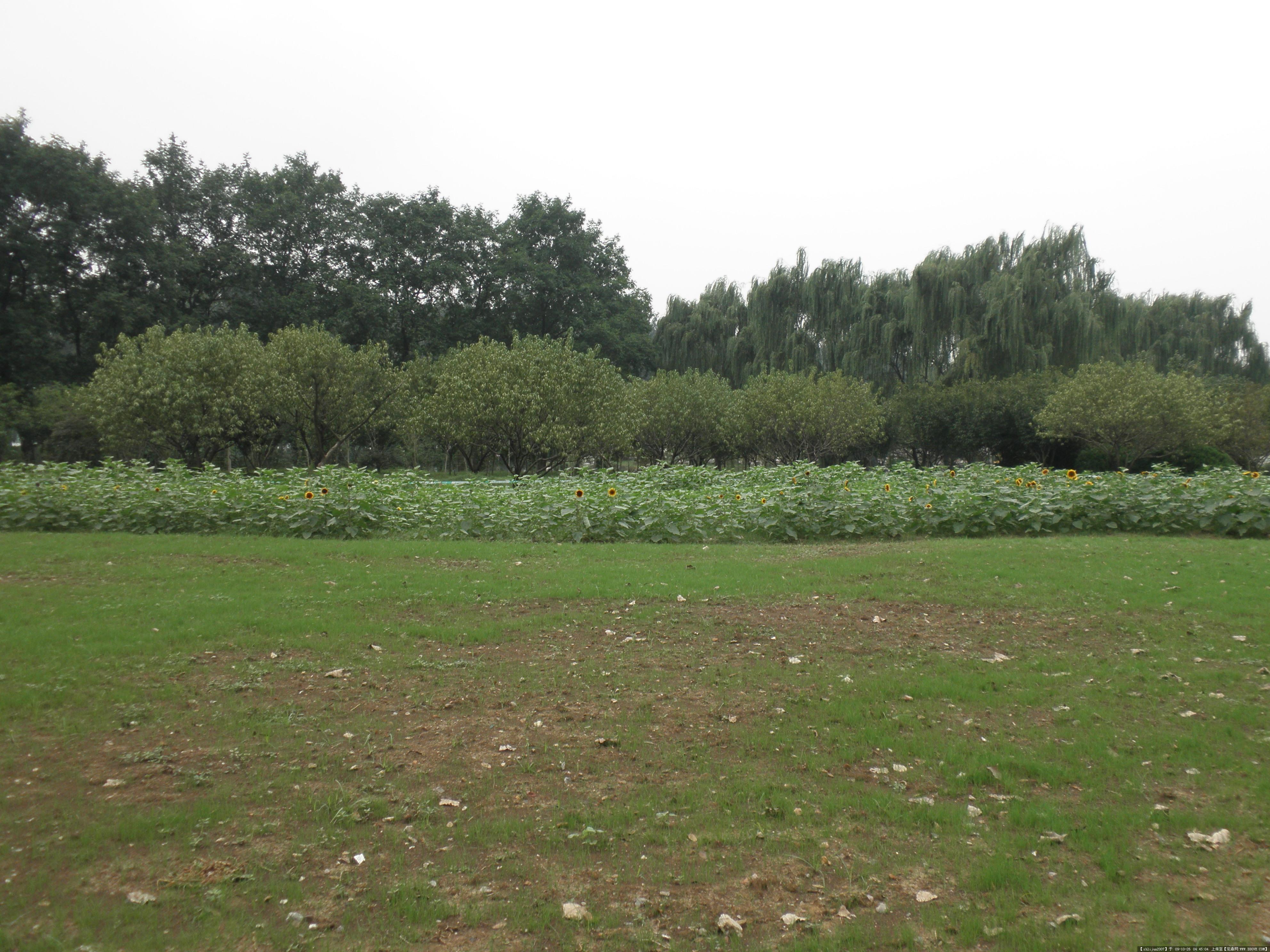 公园中的景观植物随拍