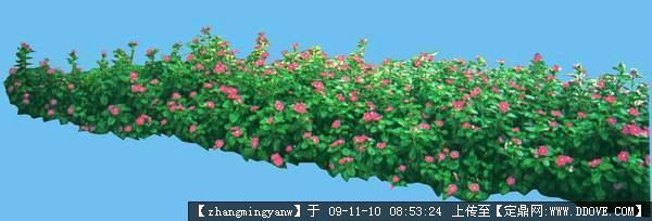 植物抠图草花类素材