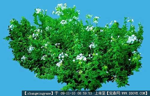植物抠图观花类素材