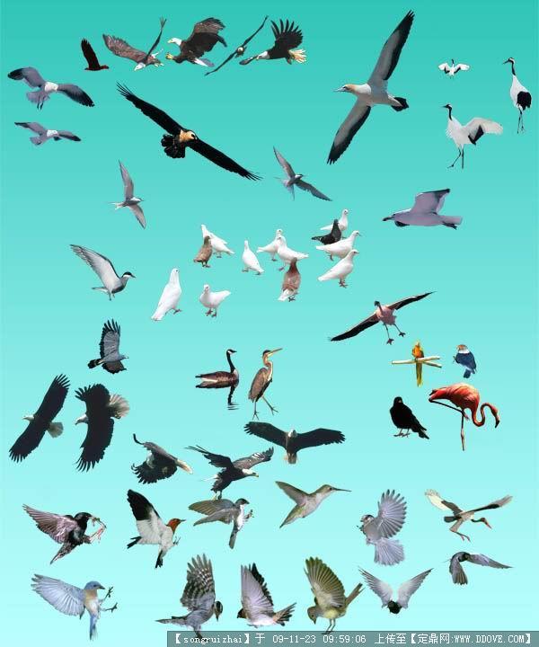 各种鸟类psd分层动物素材