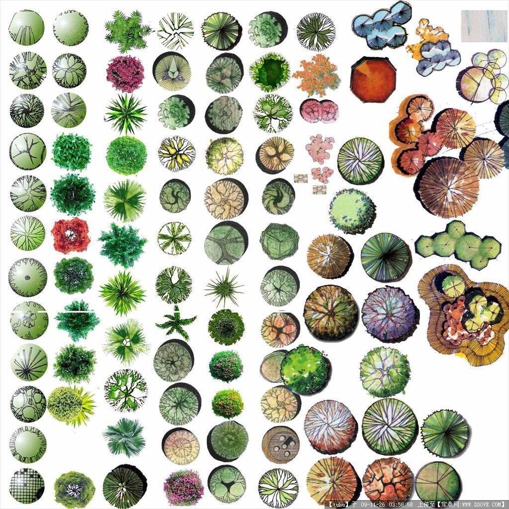 平面树素材彩图2