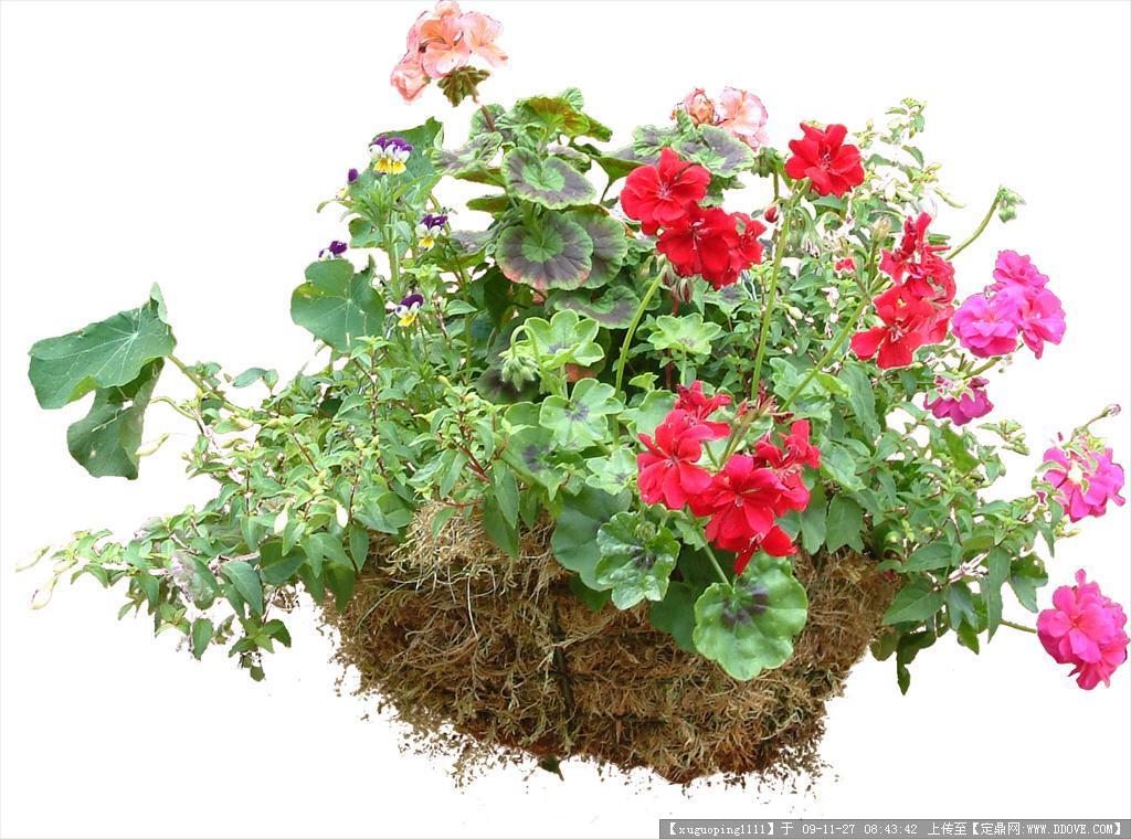 灌木植物psd素材