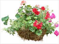 素材 配景素材/灌木植物PSD素材...
