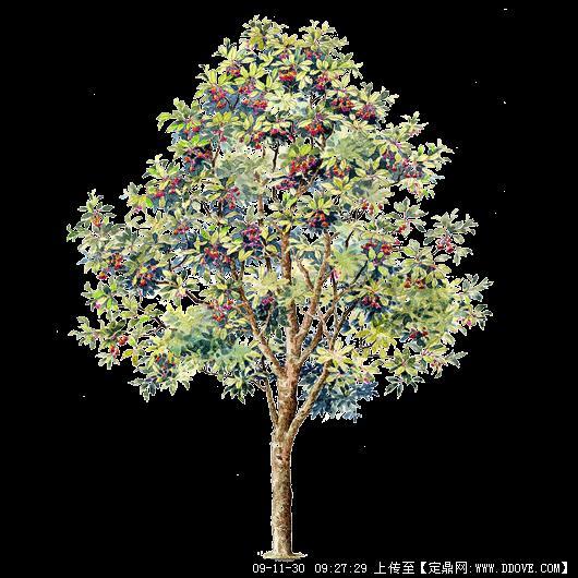 树木立面图