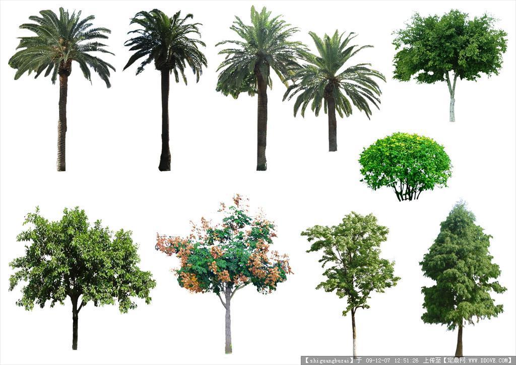 近景手绘树