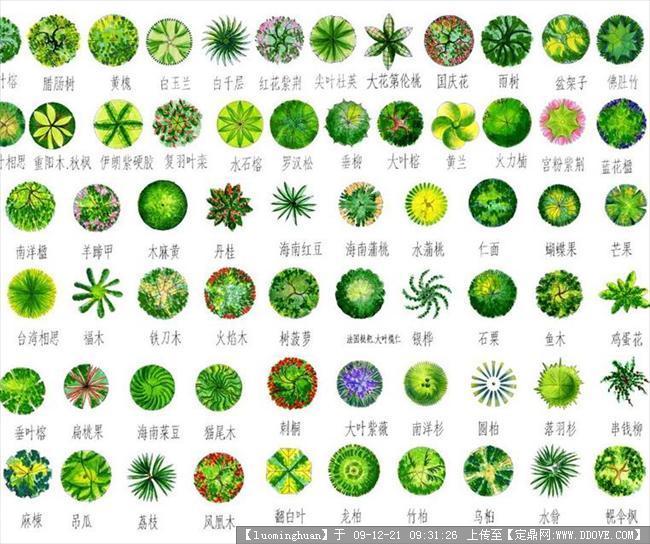 配景素材 园林植物