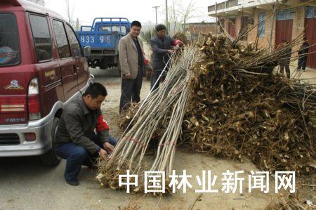 淅川成立苗木验收小组 严把苗木质量关