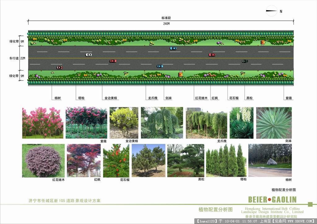 道路绿化标准段(平面+透视)的图片浏览,园林方案设计图片