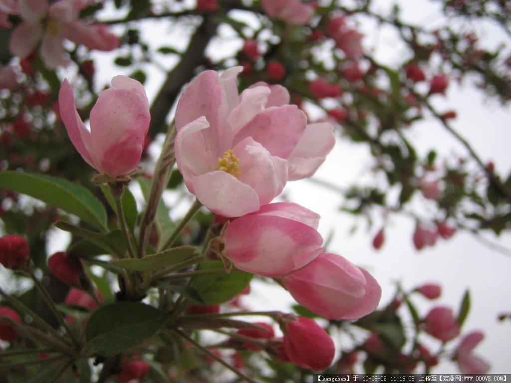 效果图 园林/常见植物实景图片30张